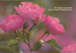 IMP róże2